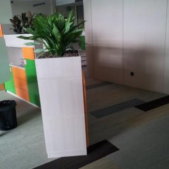 Roślina w pojemniku na ściance